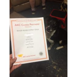 Certificate of enrollment of AKC Canine partners program